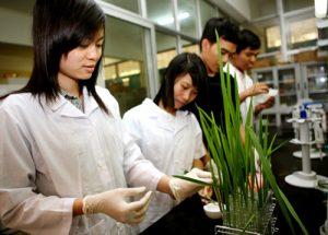 Công việc ngành môi trường gồm những gì? Học ngành này dễ xin việc không?
